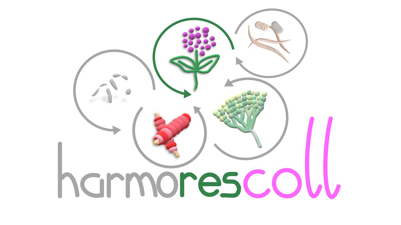 Harmorescoll